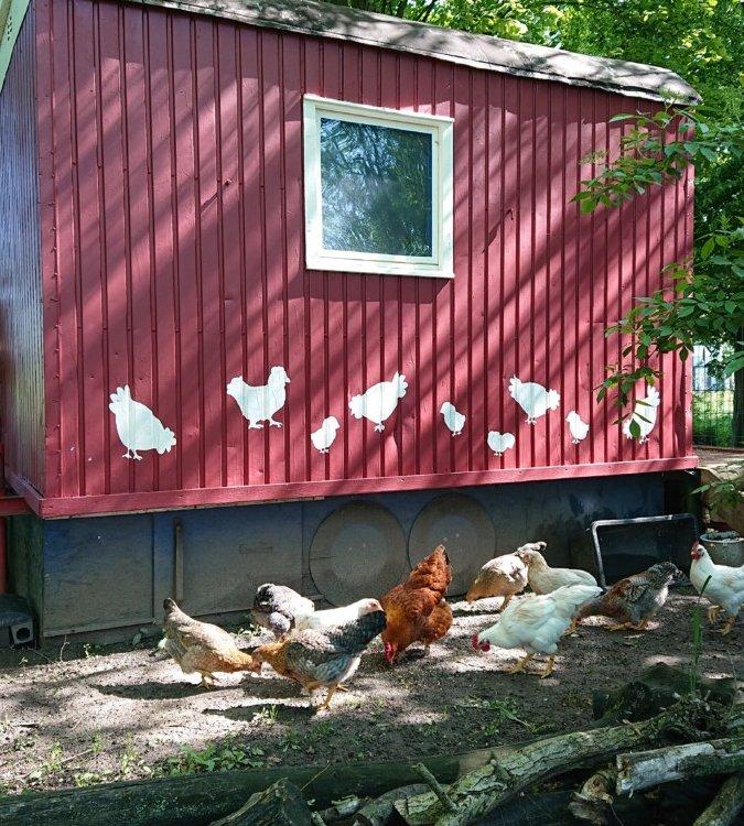 Kita Bissendorf Hühner1