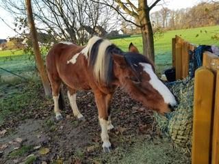 Kita Bissendorf Pferdeprojekt